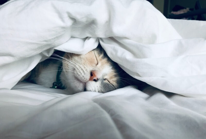 【朝活のすすめ】4時半に起きてます