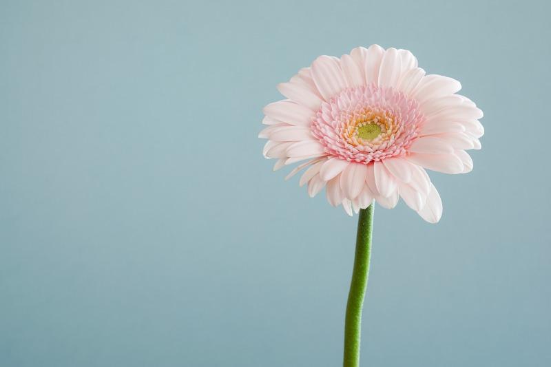 【感想】シェリル・サンドバーグ『LEAN IN―リーン・イン 女性、仕事、リーダーへの意欲』